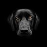 avatar-client-michael